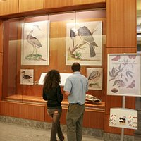 Visitors at the Spring Exhibit Reception check out the Abbott prints.