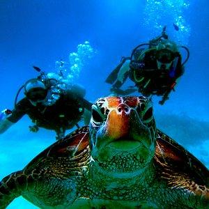 Blue Dive Port Douglas. Superb scuba on the Great Barrier Reef.