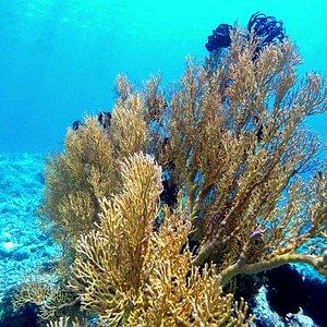 Tumbak bay close to Bentenan. Corals Garden, Virgin Islands, Wild Mangrove ...