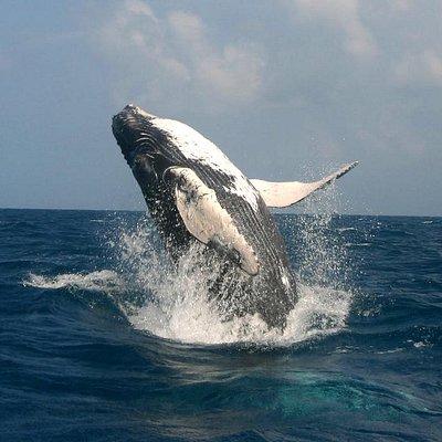 Walewatching - Das Highlight des Jahres