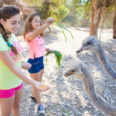 Interact with the animals: Feed them and have fun with them!