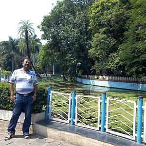 Lotus pond at Saras Garden