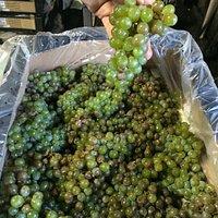 South African Sauvignon Blanc Grapes