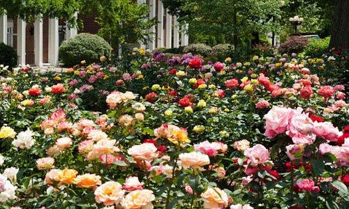 @ Wrigley Gardens 5