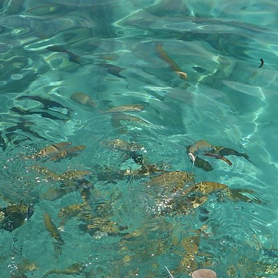 Fishes going for the food ❤️