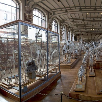A view down the museum, ground floor. More skeletons than you can shake a bone at.