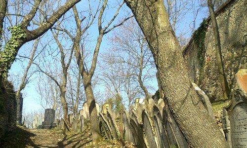 mikulov, jewish cementary