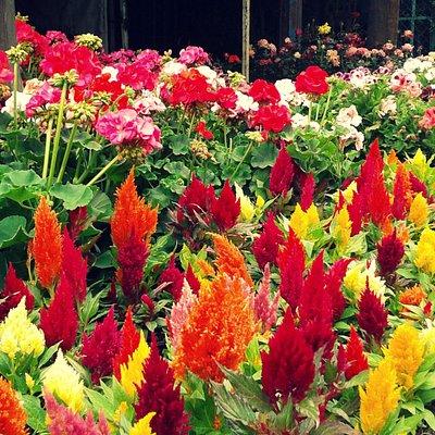 Venta de flores extraordinarias.