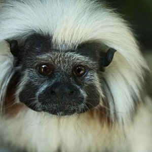 When you visit the zoo, you are helping us save this critically endangered species!