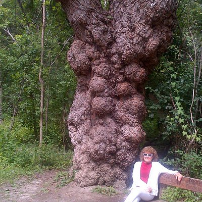 Fascinating tree with burl deformities