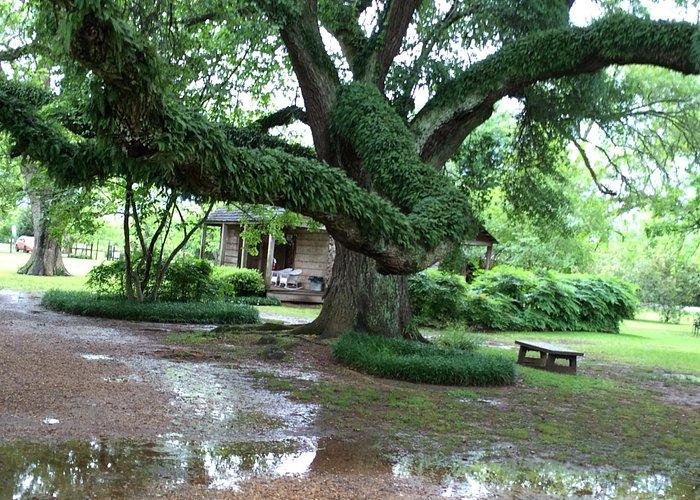Live Oak at Melrose