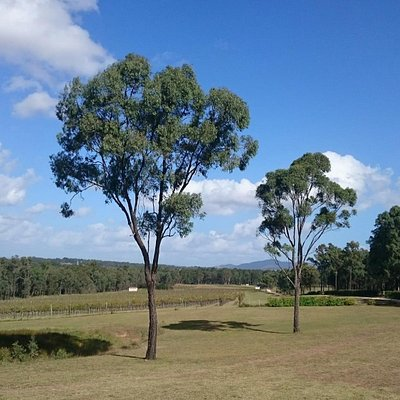 Degen Wines, Hunter Valley, NSW, Australia