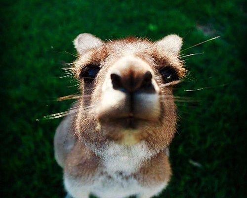 Get up close with kangaroos!