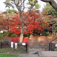 西河原公園の紅葉   狛江市元和泉2-38-1
