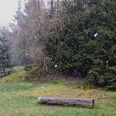 Spring snowfall in the Kellerwald National Park