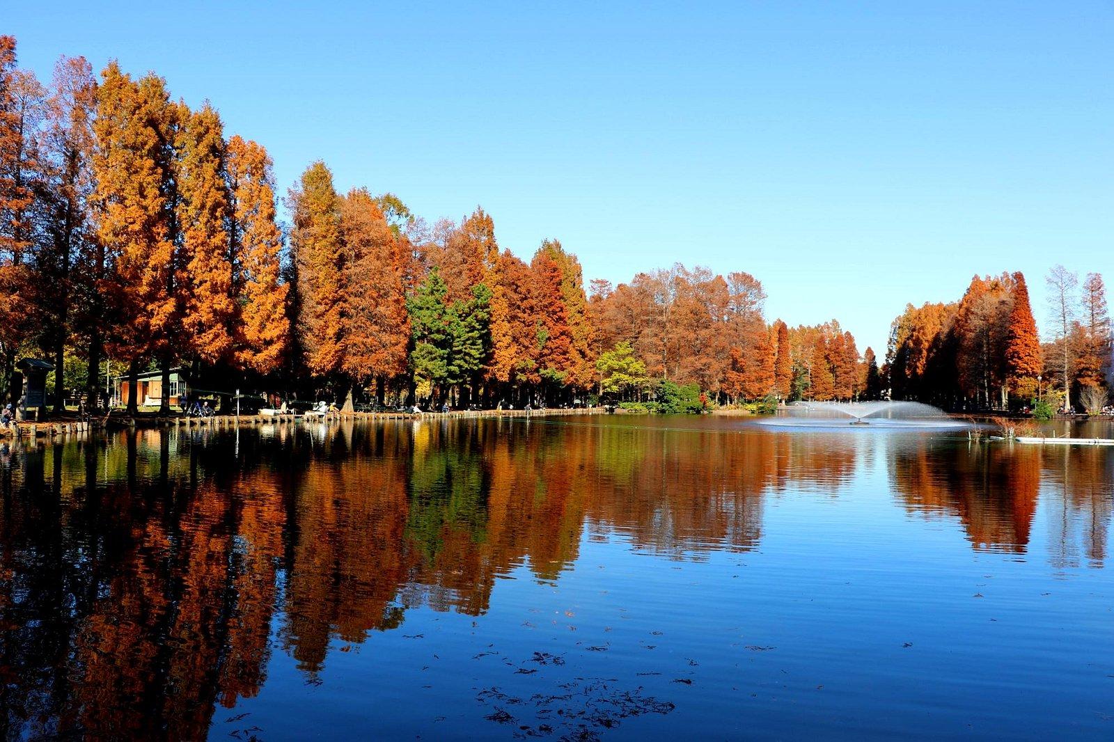 公園入口から観た晩秋の別所沼