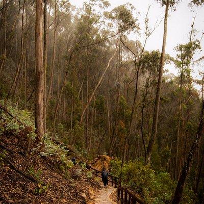 Sendero en el bosque (Cortesía de Christian Piedrahita)