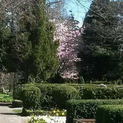 Cherry blossoms at Bispebjerg