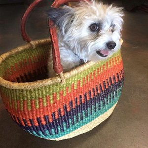 Baskets galore *puppy not included