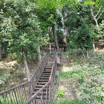 上野毛自然公園/階段を上がると桜の広場に行けます