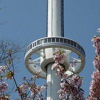 周りの八重桜が綺麗でした