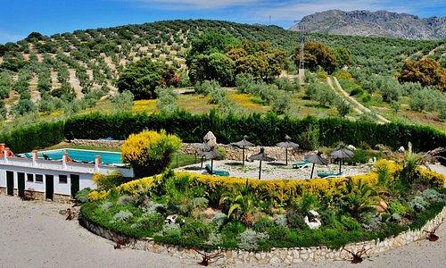 Gardens & swimming pool