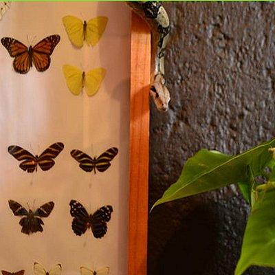 """Museo vivo es una cápsula de conservación y un """"sentidero"""" de naturaleza"""