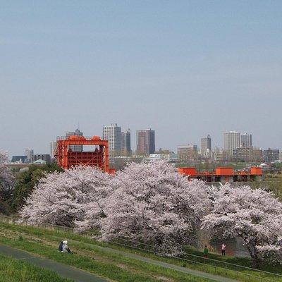 桜の木が意外に多くあります。