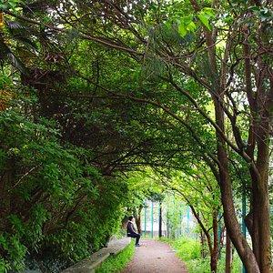 松の川緑道_慶応グラウンド横