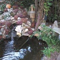 Mon bassin avec la cascade