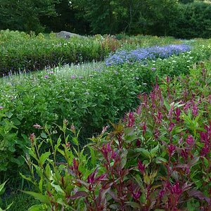 Rows of flowers for the picking!