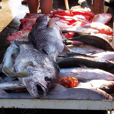 A good catch of fish from a fishing charter