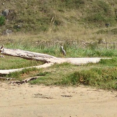 Some birdlife on Waipatiki Beach.