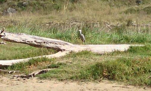 Some birdlife on Waipatiki Beach.