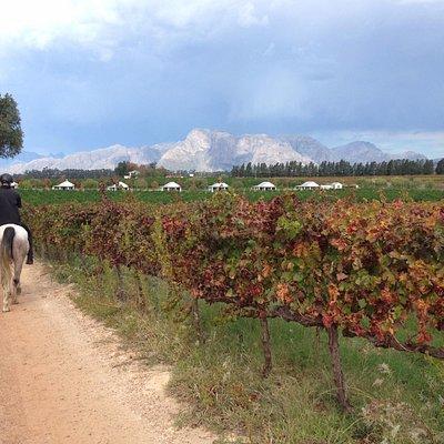 blissful strides on horseback