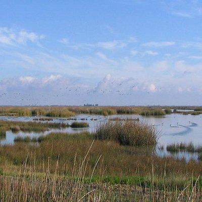San Luis NWR Wetland