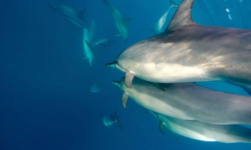 ...life at it's best! Swimming with Dolphins....pure beauty!