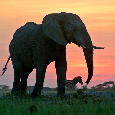 Wilmot Safaris