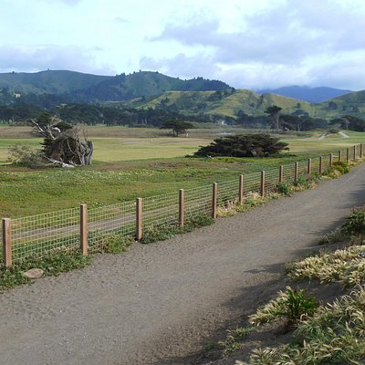 Walk down this trail towards Mori Point. The Pacific is maybe 50 feet to the right over the gras
