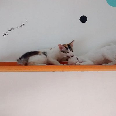 Two adorable kittens pull at each others' ears as they play around at the Cat Studio.