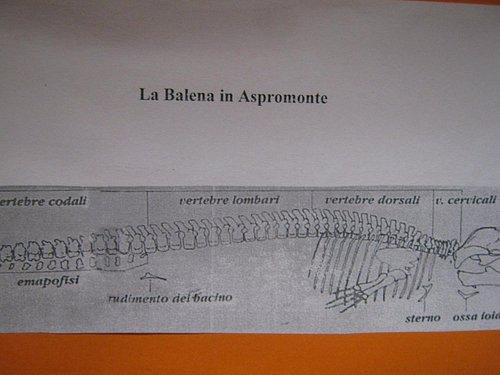 la balena dell'Aspromonte