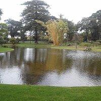 Lampi keskellä puistoa