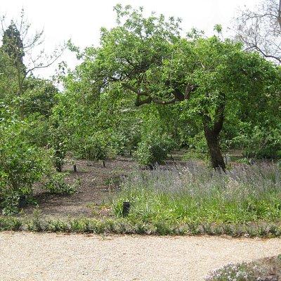 Hierbij een stukje van het prachtige areboretum De Dreijen in Wageningen.