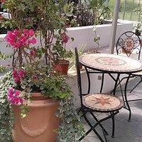 The little botanical garden