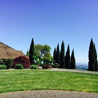 White Rose Winery