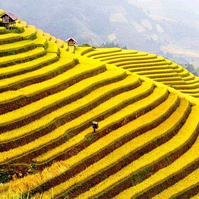 Sapa's rice terrace
