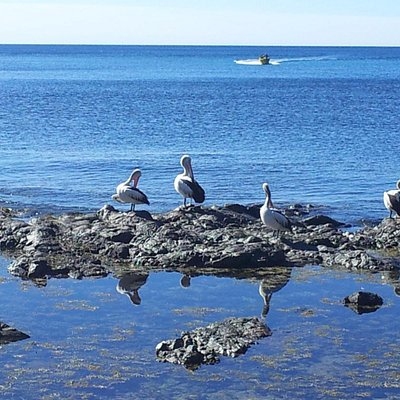 Pelicans sunny themselves