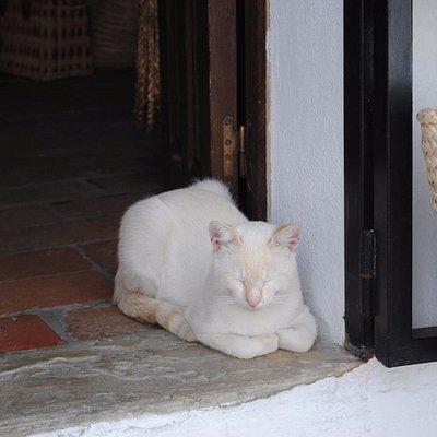 Este es Celestino, el gato de Juani
