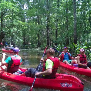 Kayak Swamp Tours from New Orleans