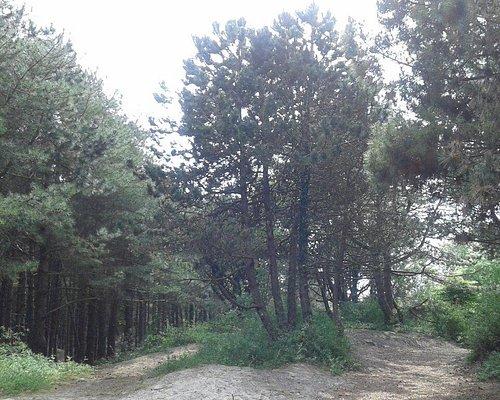Parc Nature Baie de Canche